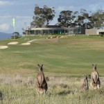 Kangaroos at The Growling Frog