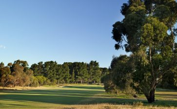 Curlewis on par and potent