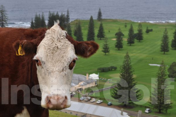 A golf fan at Norfolk Island