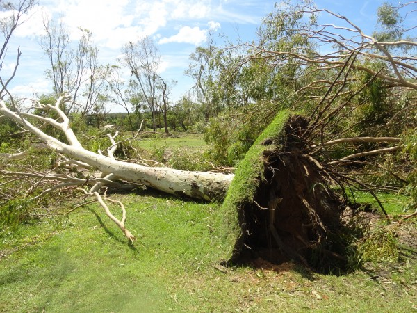 Trees lie across a fairway at Yeppoon Golf Club