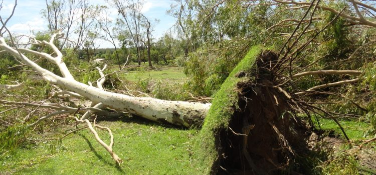 Clubs blown away by post-cyclone support