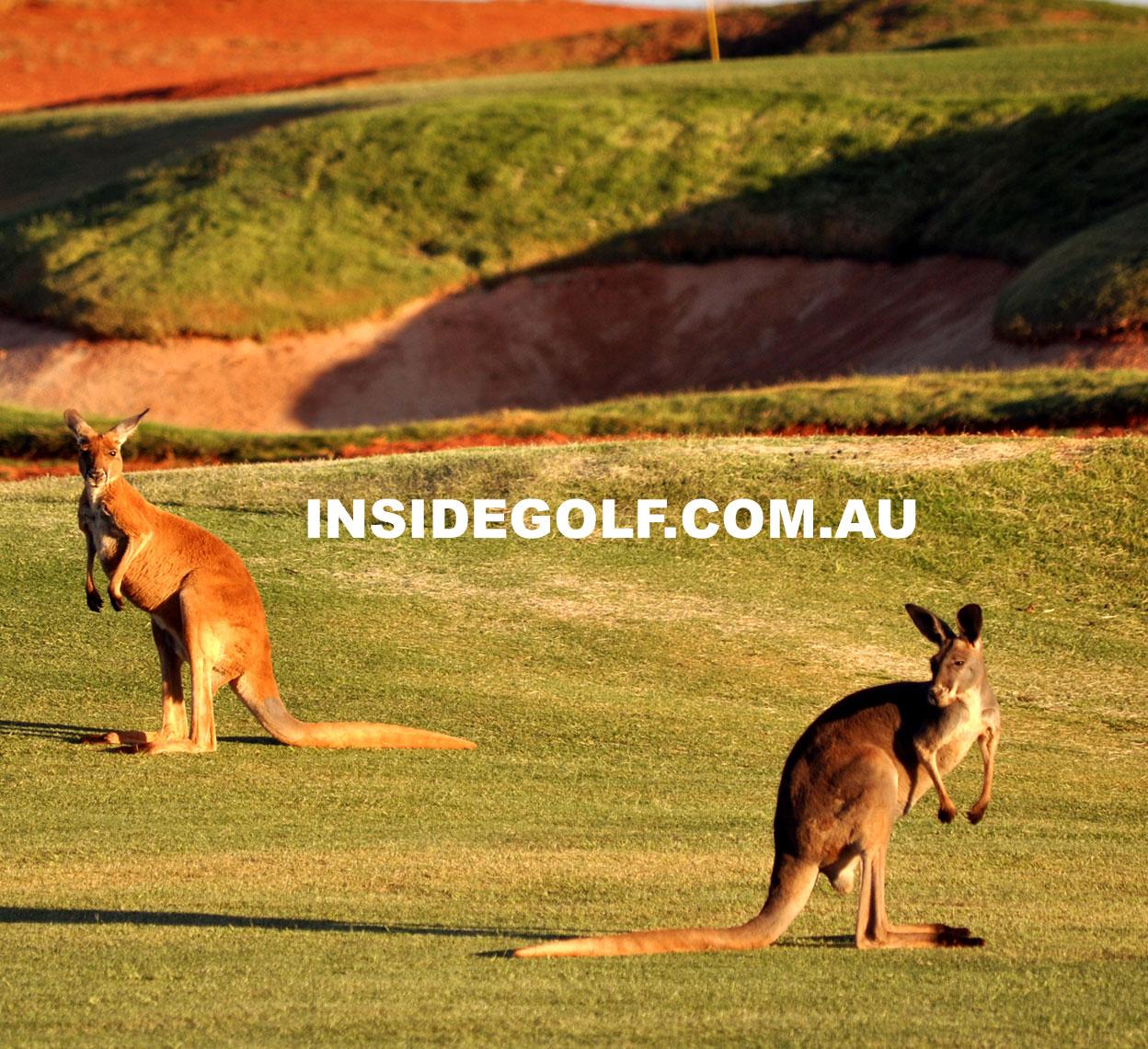 kangaroosKalgoorlie