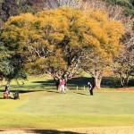 City Golf Cub