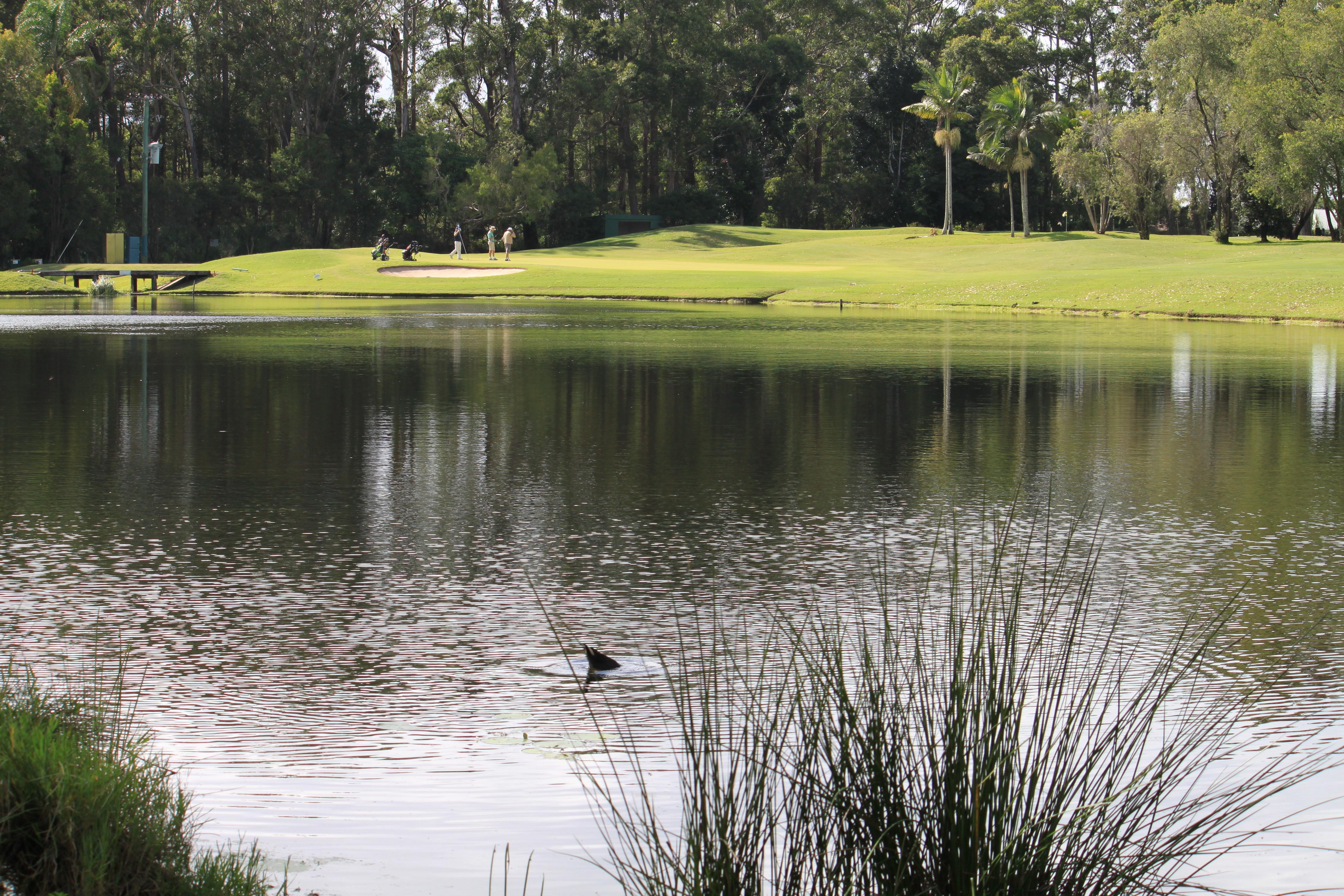 Headland golf